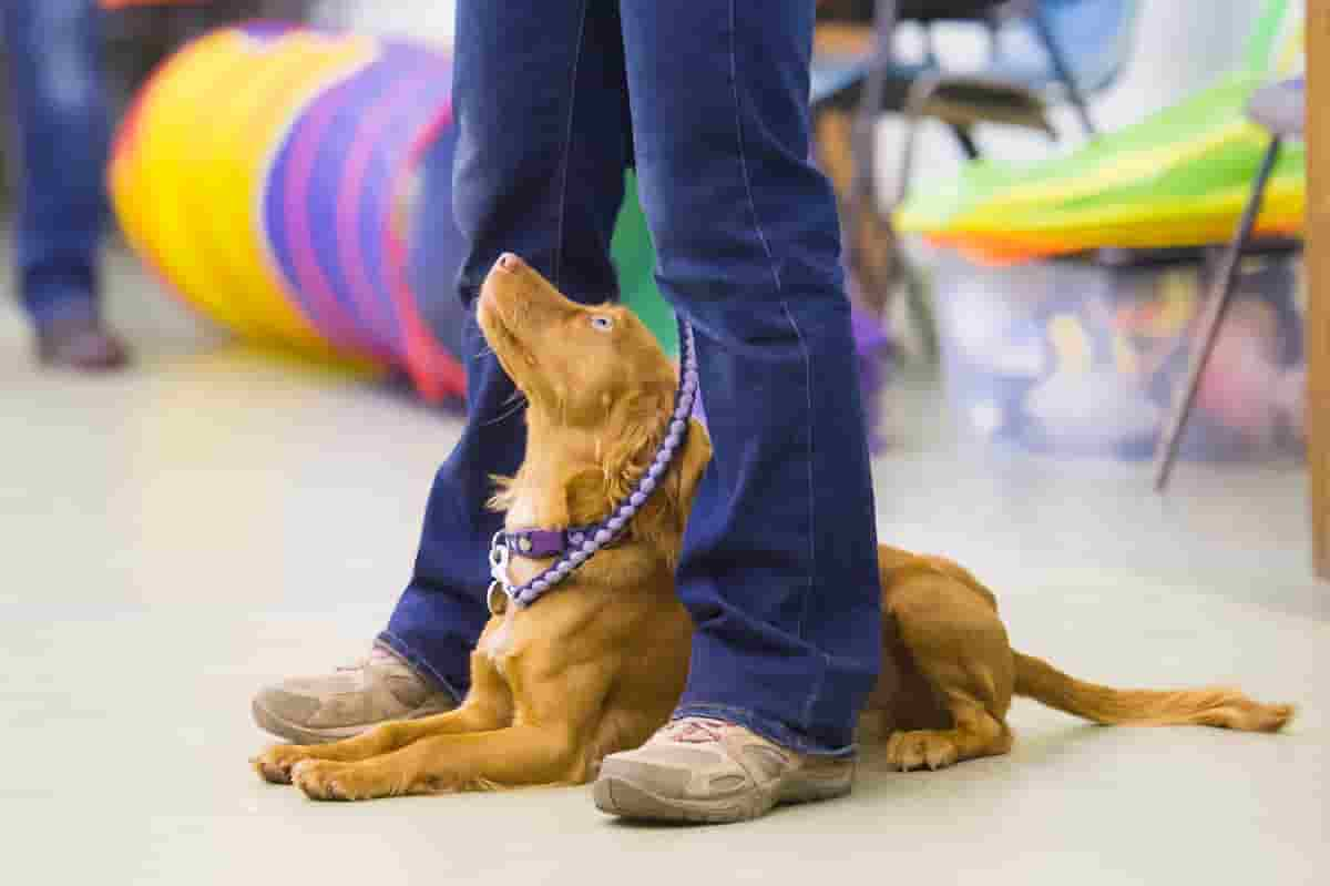 dog training classes redditch studley stratford